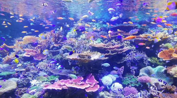 move a fish tank