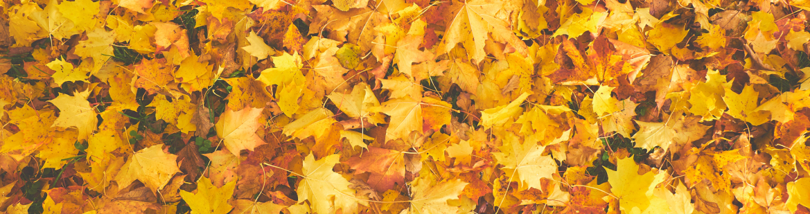 tips for moving in autumn